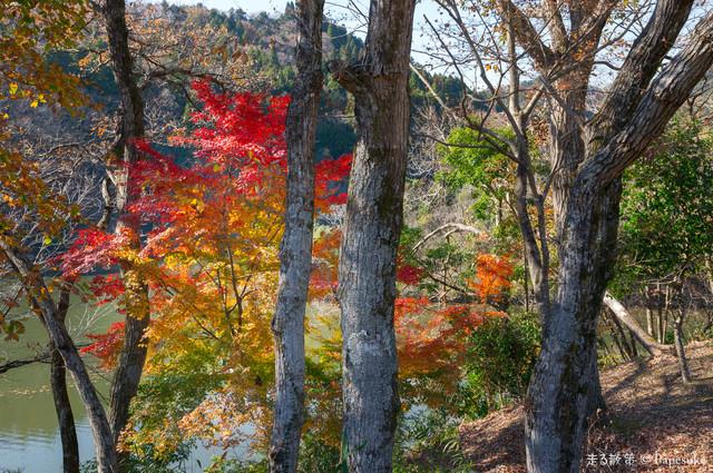 笹川湖畔公園