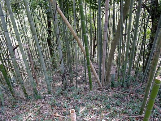 12)小坂城跡.jpg