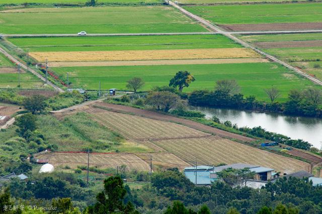 燧ヶ池の曼珠沙華